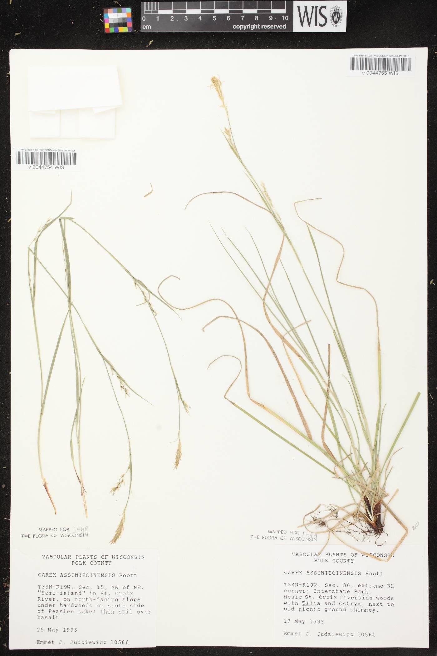Carex assiniboinensis image