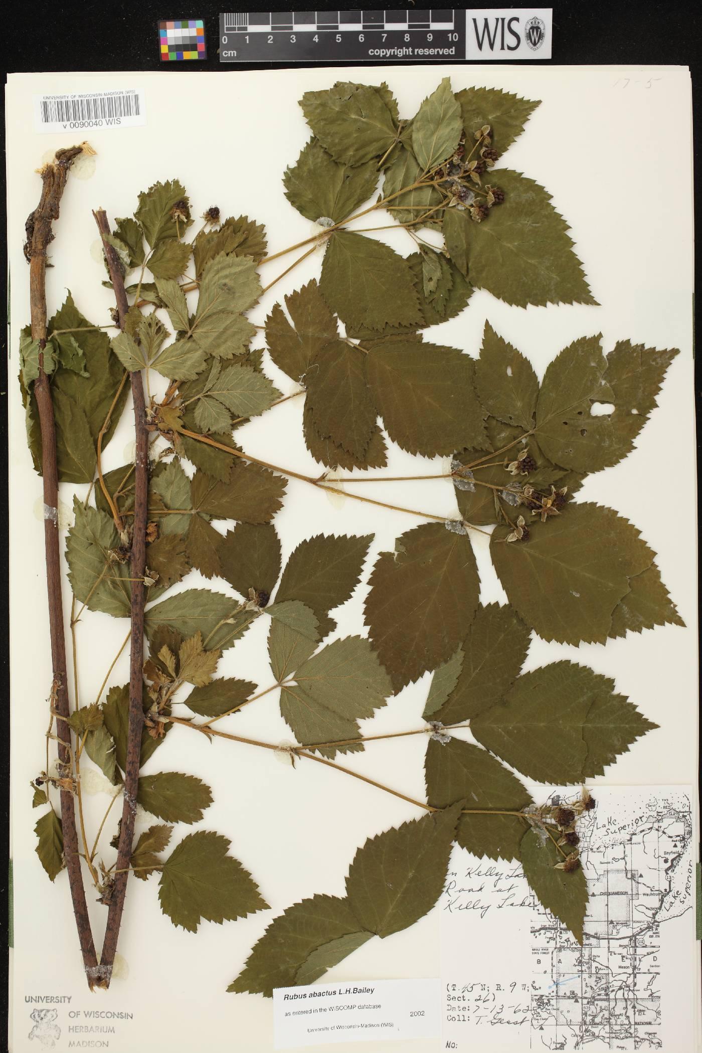 Rubus pensilvanicus image