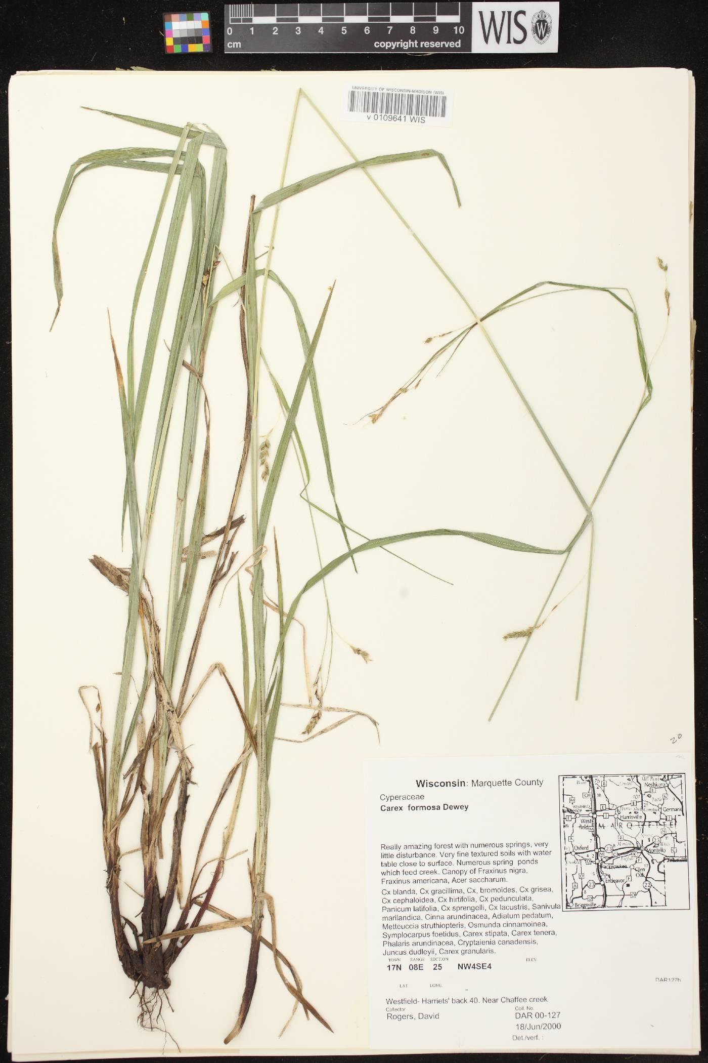 Carex formosa image