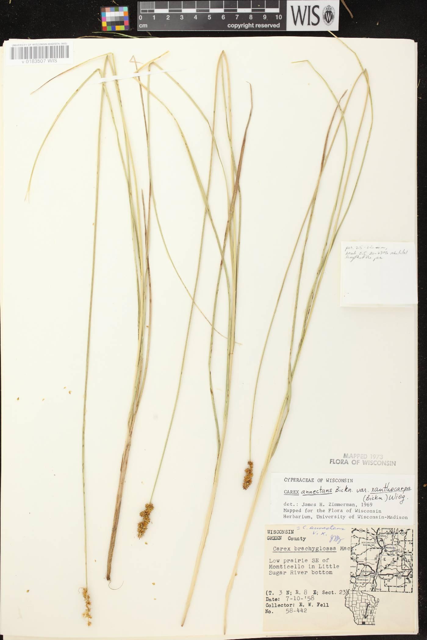 Carex annectens image