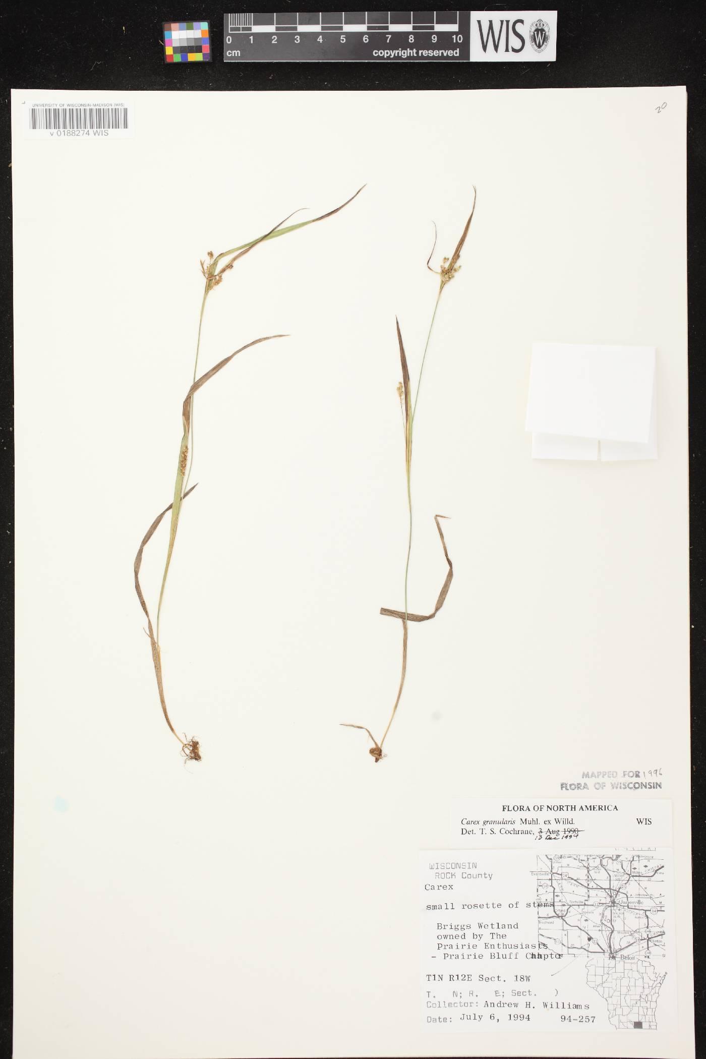 Carex granularis image