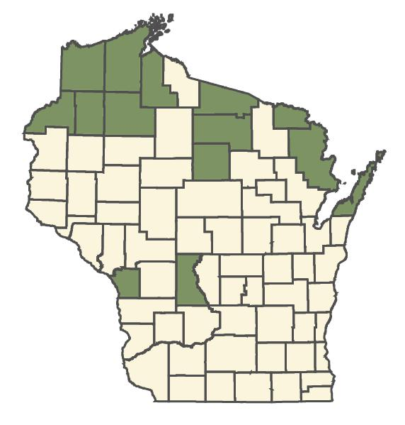 Alnus viridis dot map