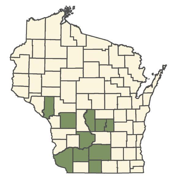 Aristida dichotoma dot map
