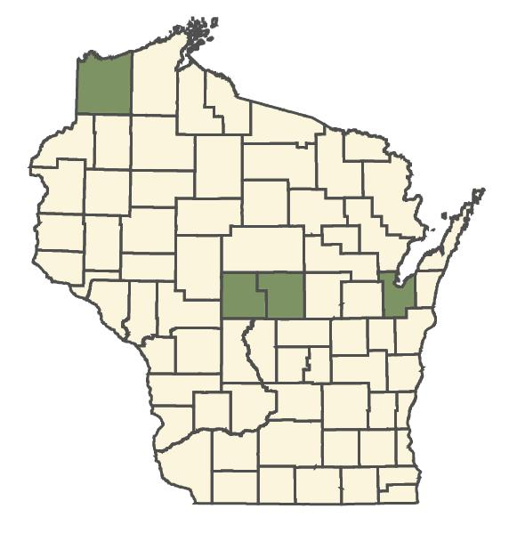 Online Virtual Flora Of Wisconsin Symphyotrichum Robynsianum - Us map aster