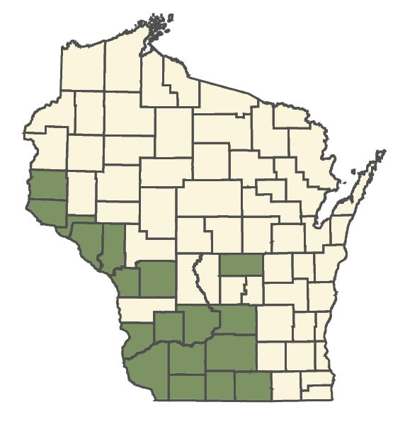 Online Virtual Flora Of Wisconsin Symphyotrichum Oblongifolium - Us map aster