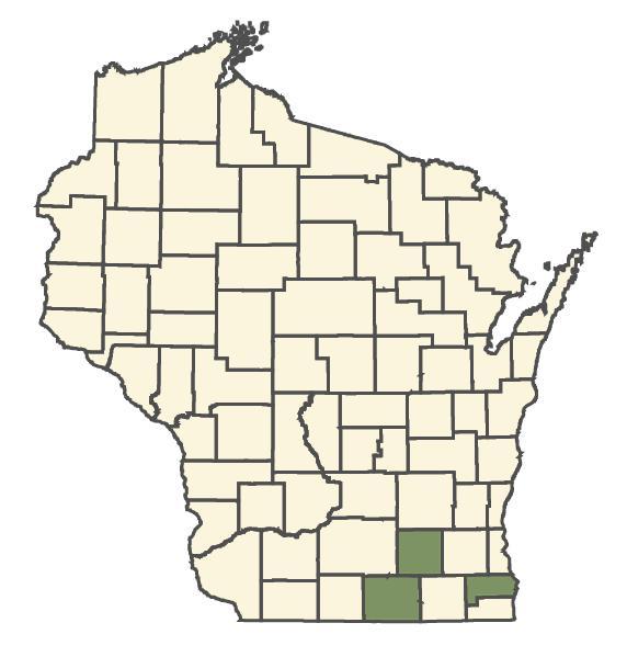 Ballota nigra dot map