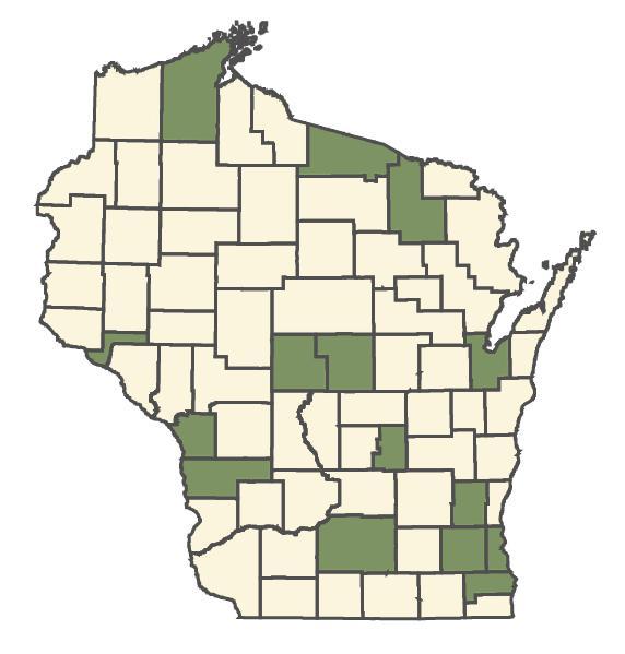 Bromus secalinus dot map
