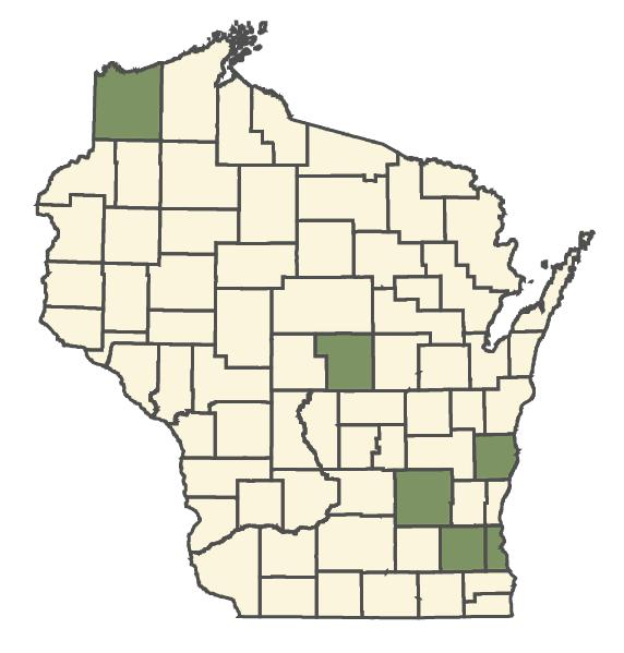Centaurea nigra dot map
