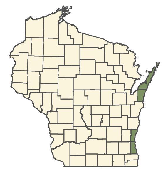 Cerastium tomentosum dot map