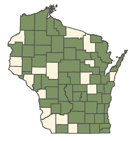 Cirsium muticum dot map