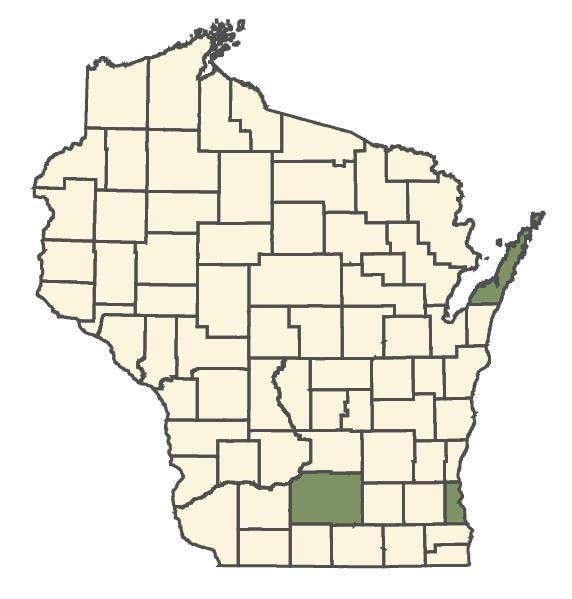 Cotoneaster divaricatus dot map