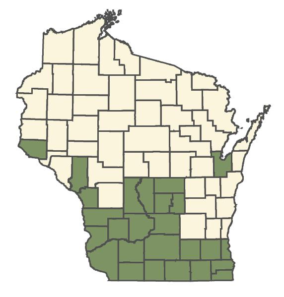 Desmodium illinoense dot map