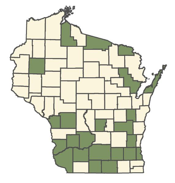 Lolium arundinaceum dot map