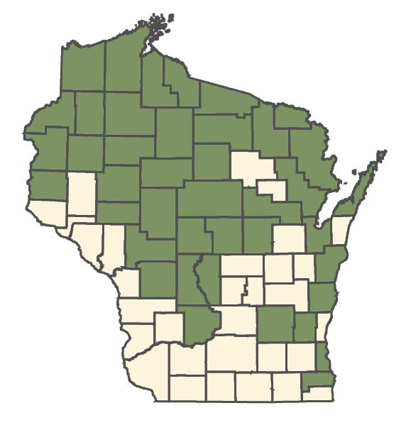 Geranium bicknellii dot map