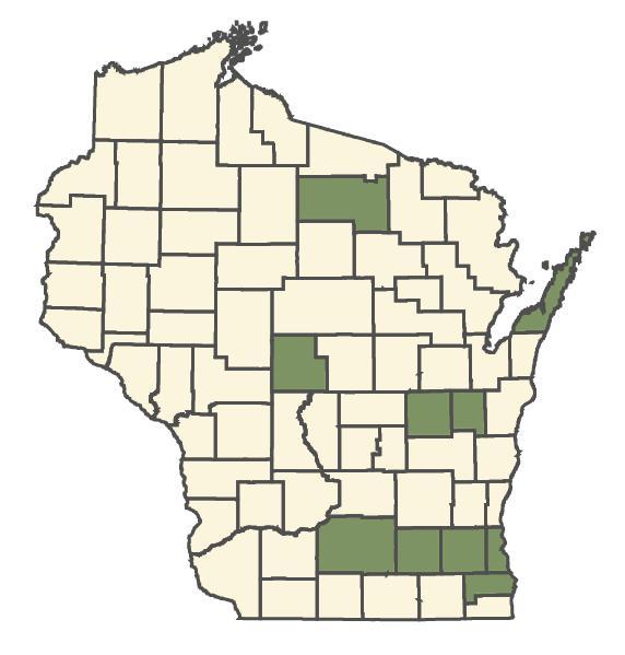 Glyceria maxima dot map