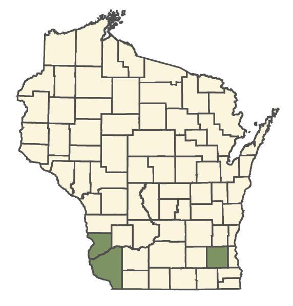 Iodanthus pinnatifidus dot map
