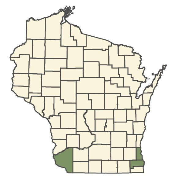 Lepidium ruderale dot map
