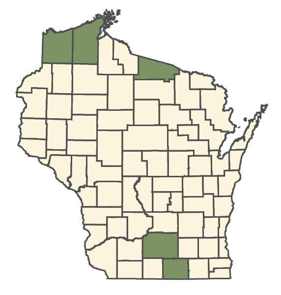 Nasturtium microphyllum dot map