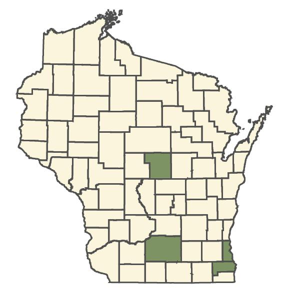 Ocimum basilicum dot map