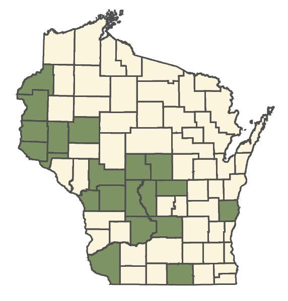 Penstemon grandiflorus dot map