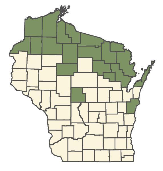 Platanthera obtusata dot map
