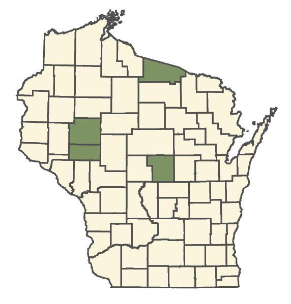 Pyrola americana dot map