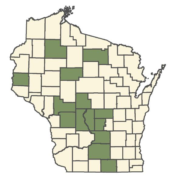 Rubus setosus dot map