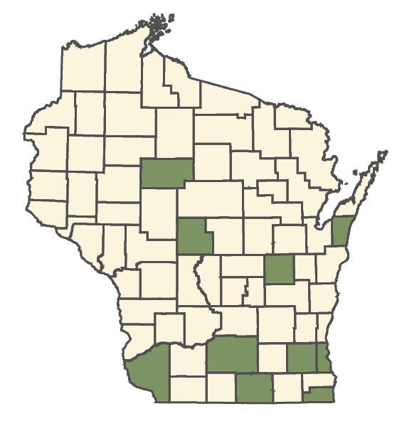 Sorghum bicolor dot map
