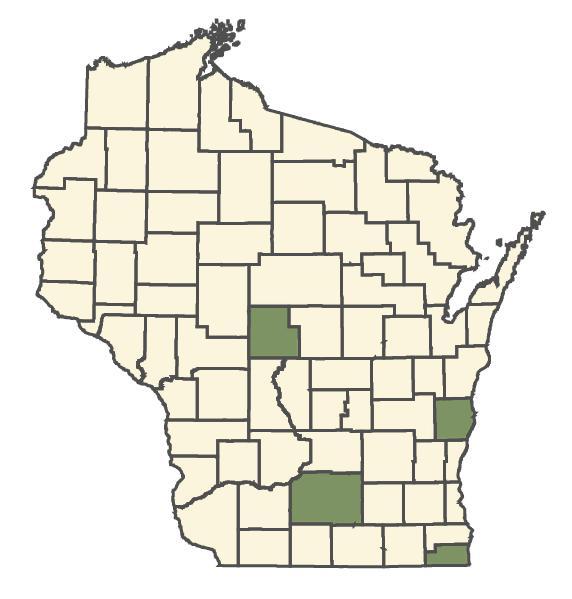 Trifolium incarnatum dot map