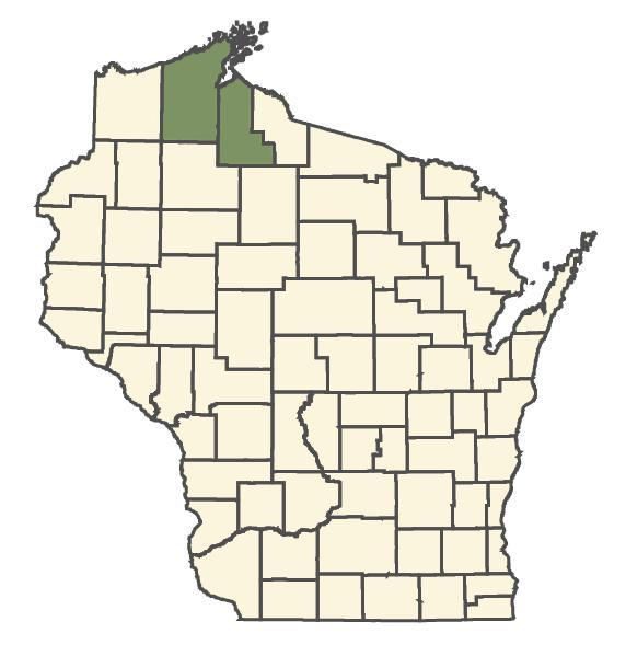 Trisetum spicatum dot map