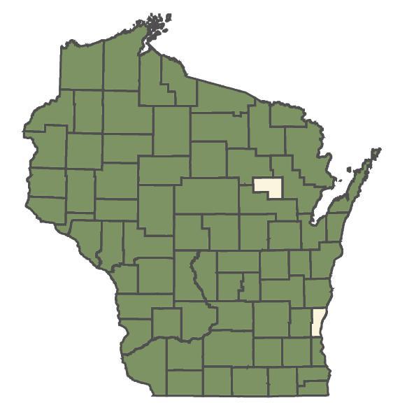 Verbascum thapsus dot map