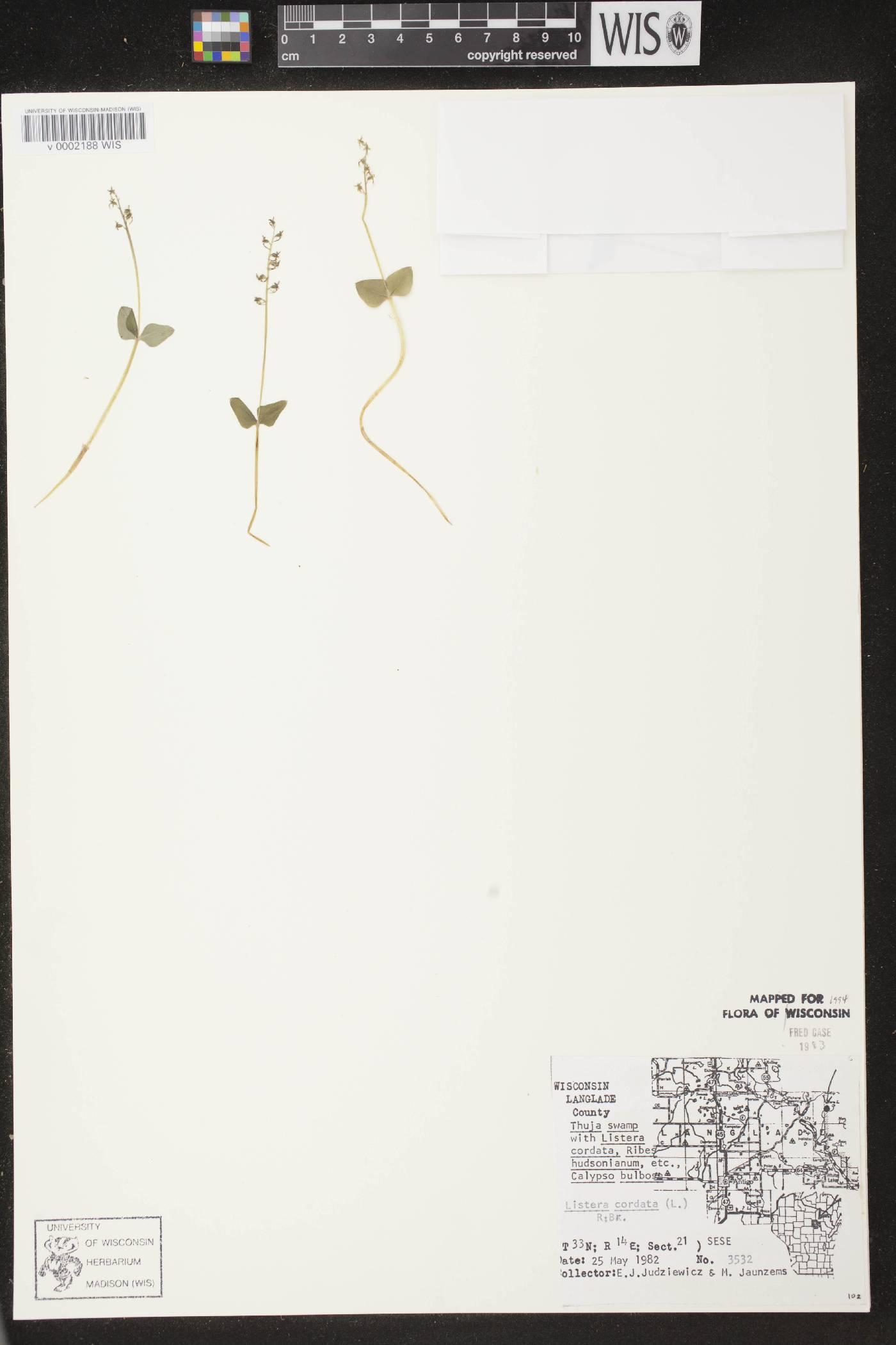Neottia cordata image