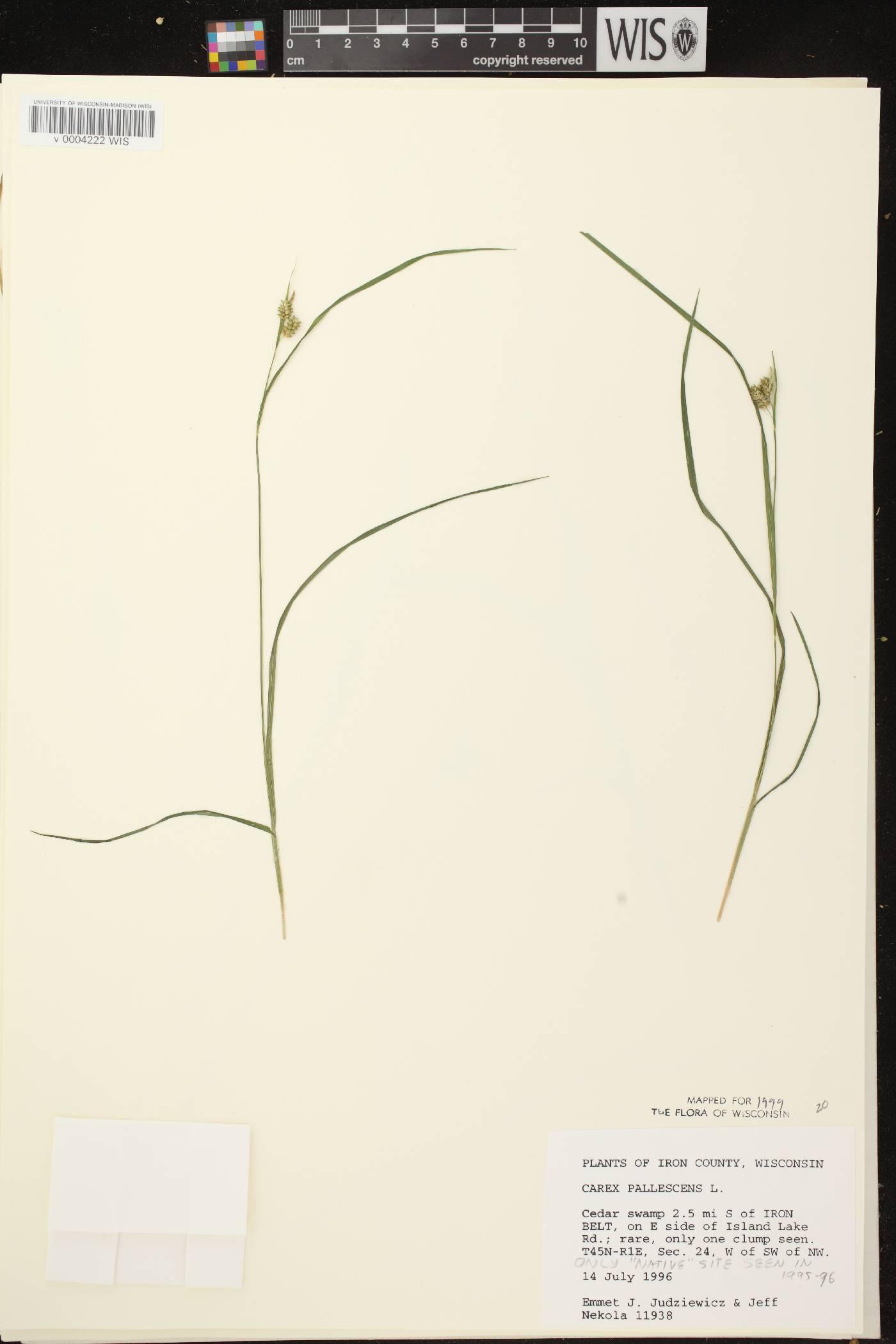 Carex pallescens image