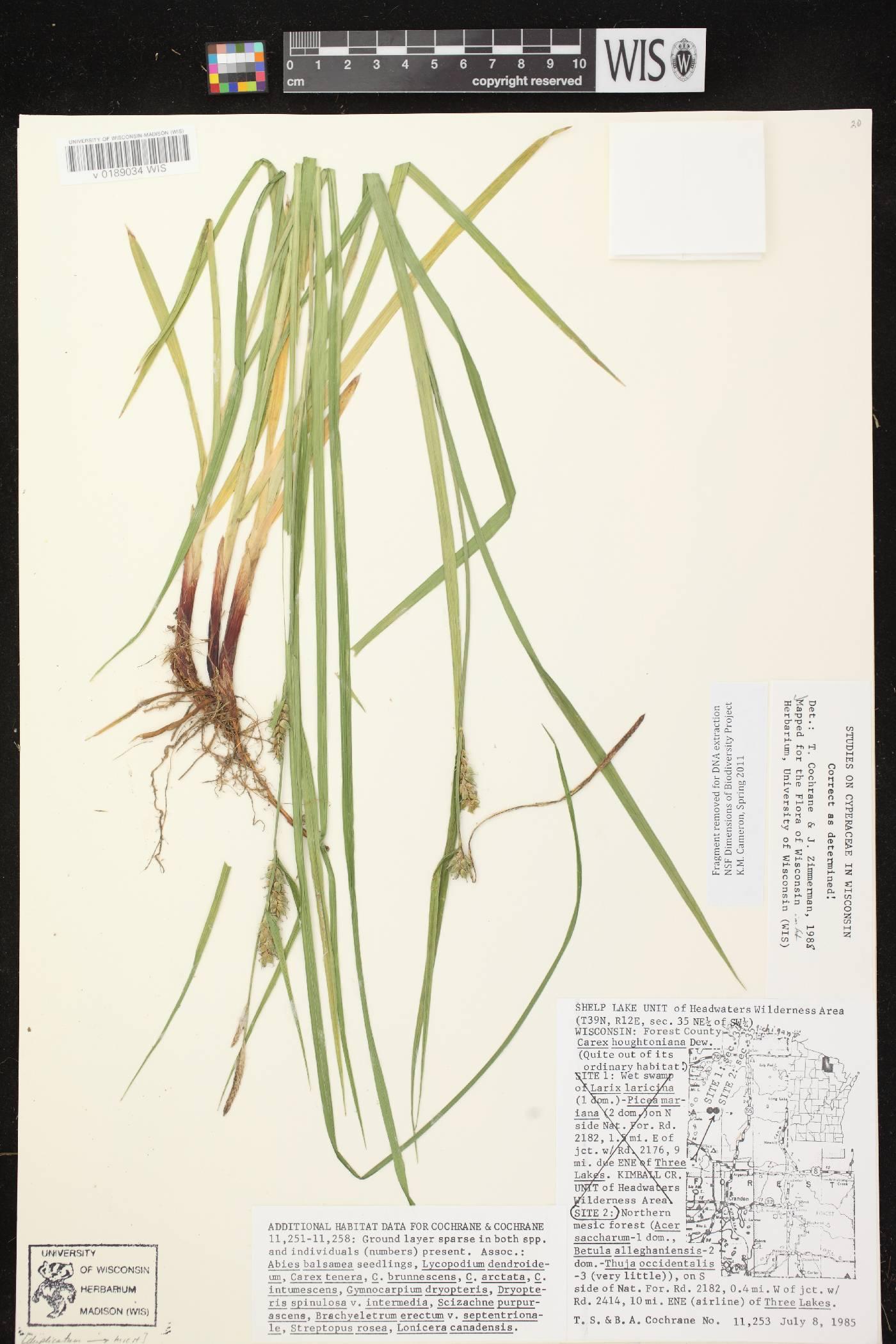 Carex houghtoniana image