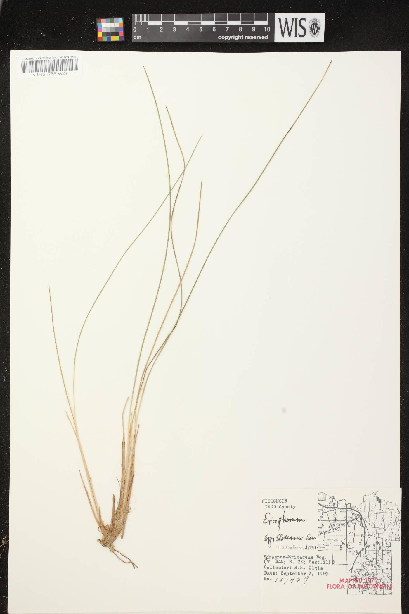 Eriophorum vaginatum image