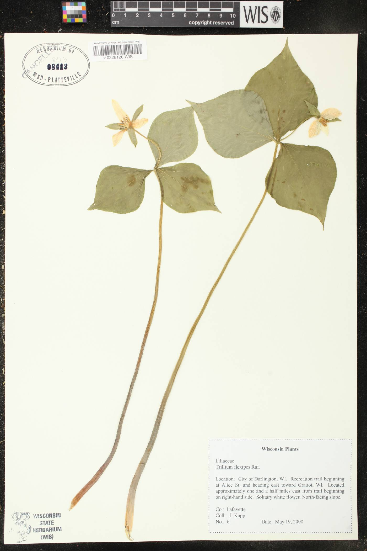 Trillium flexipes image