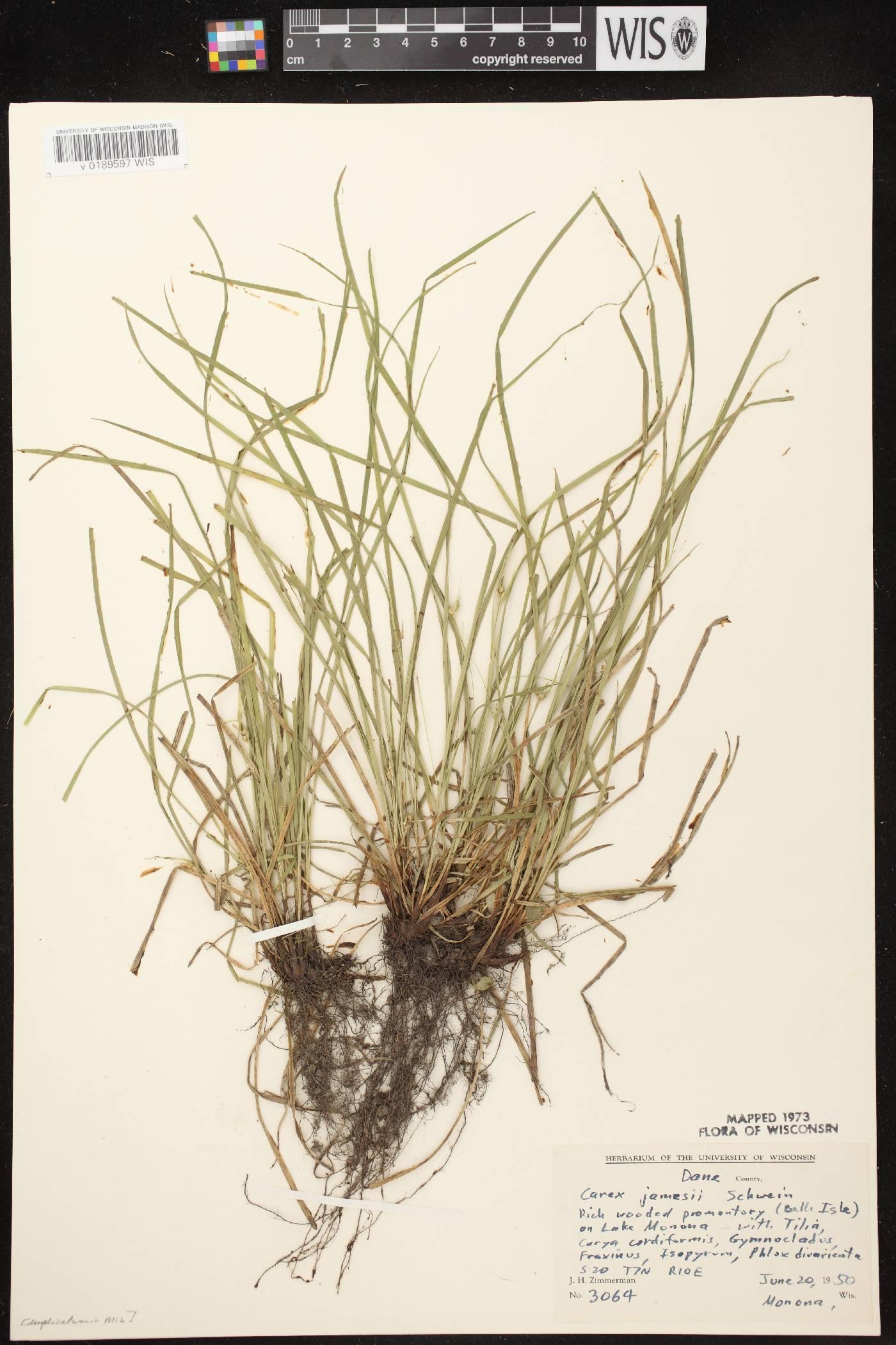 Carex jamesii image