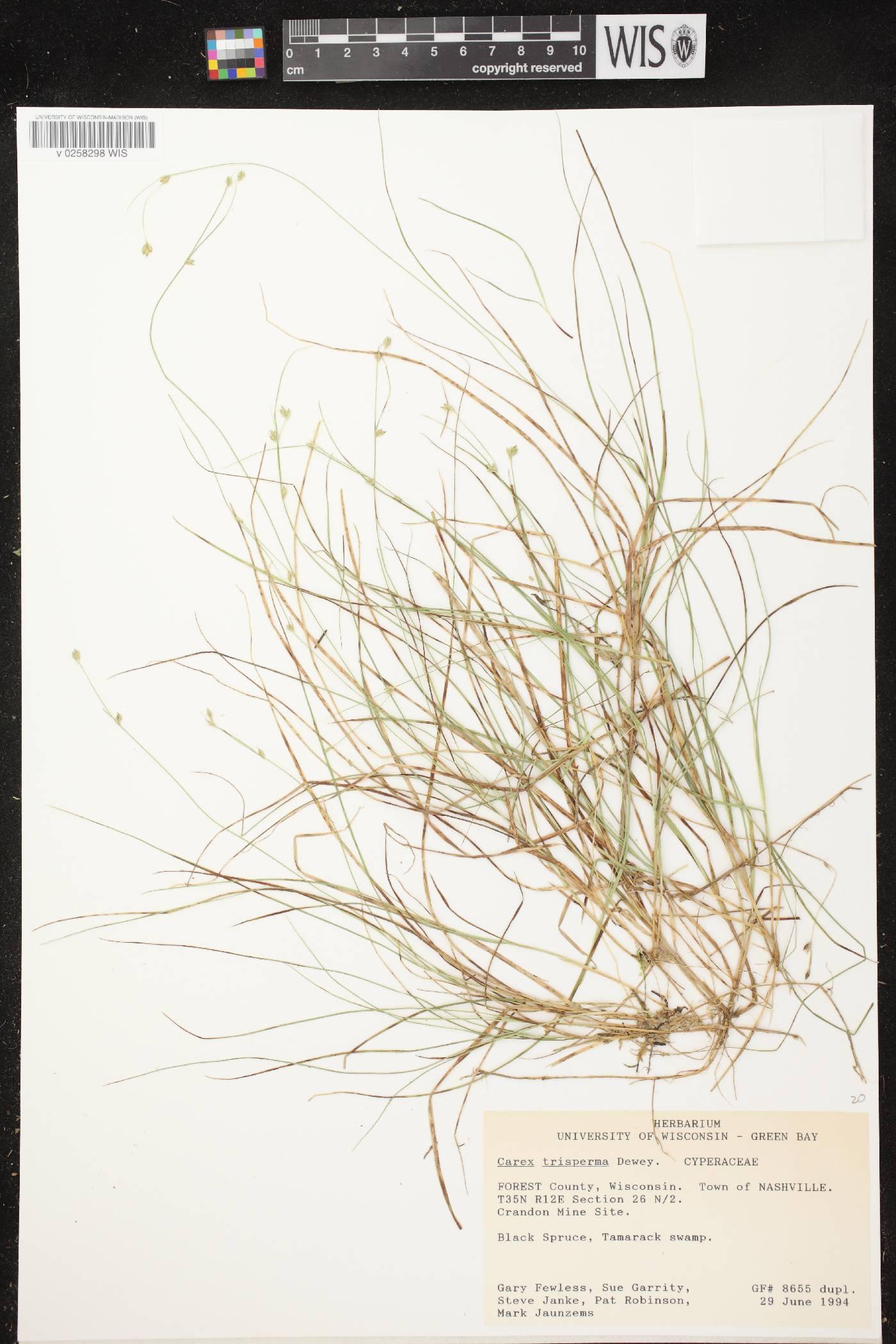 Carex trisperma image