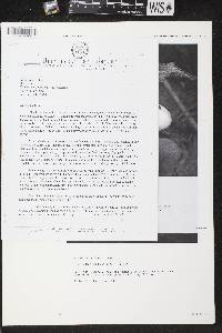 Cypripedium x andrewsii image