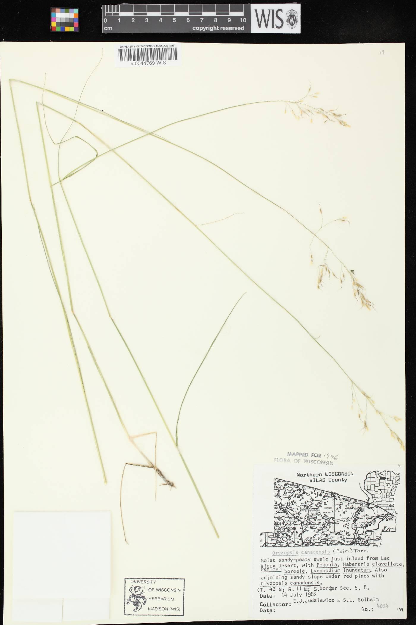 Piptatheropsis canadensis image