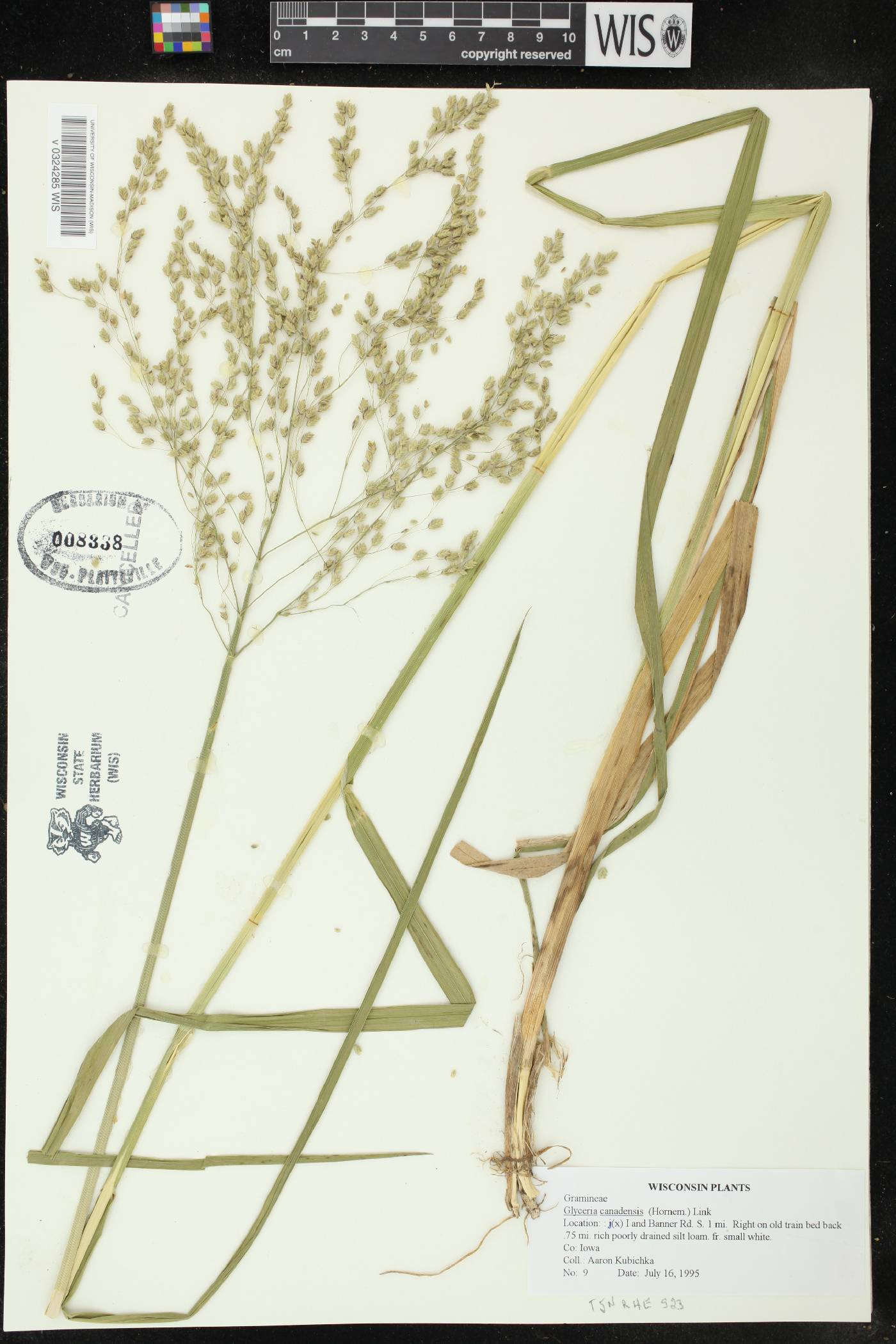 Glyceria canadensis image