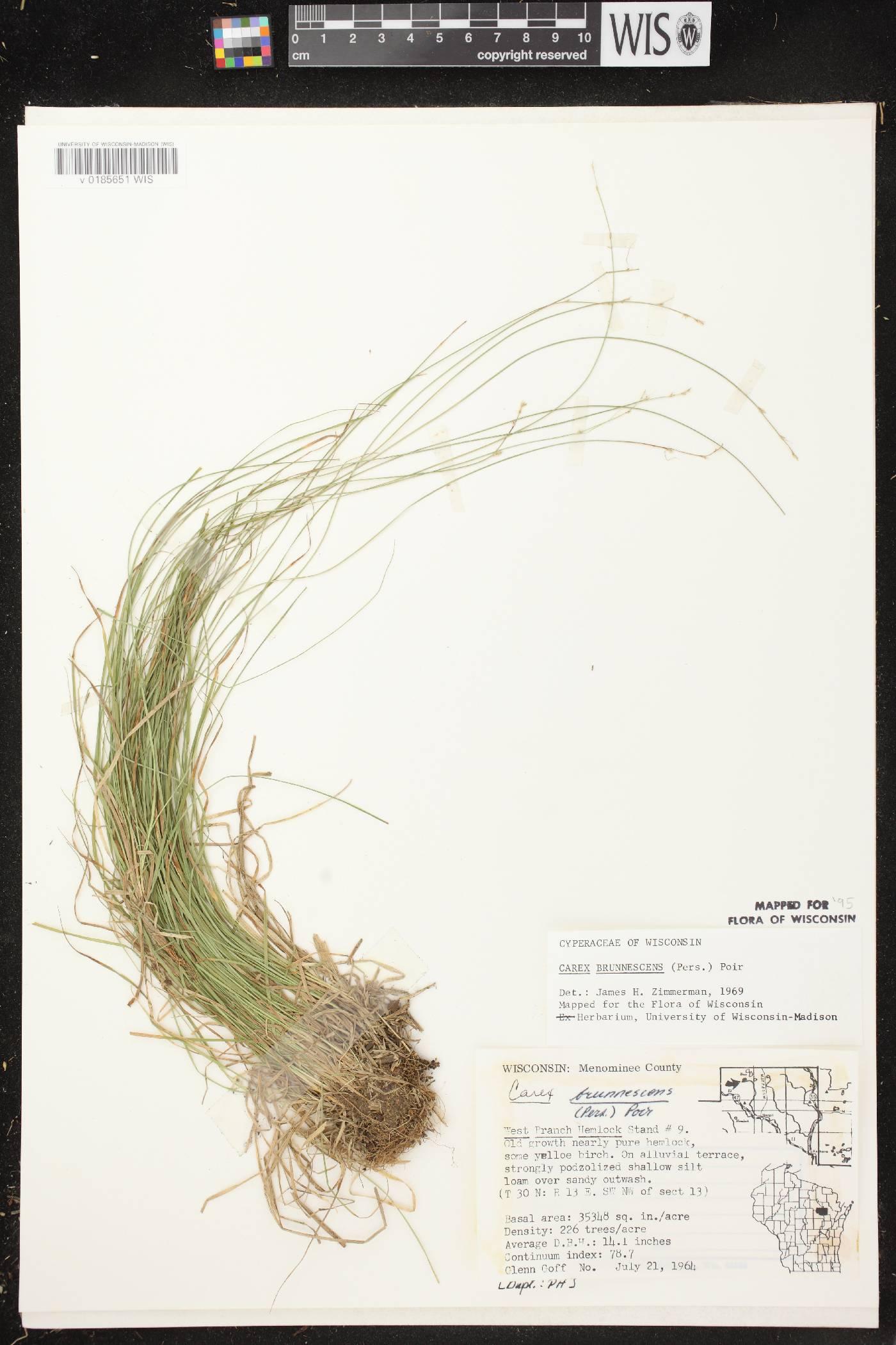 Carex brunnescens image