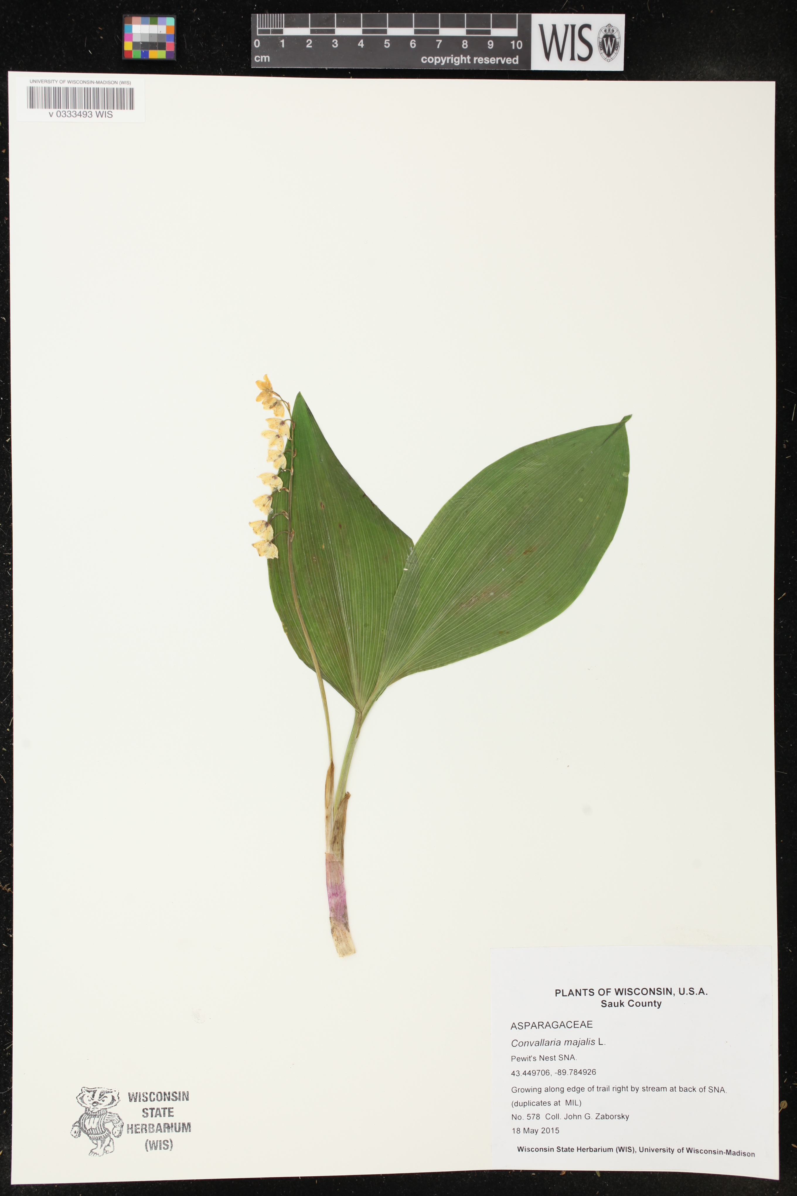 Image of Convallaria majalis